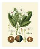 Botanical Glory IV Giclee Print
