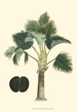 Exotic Palms III Poster