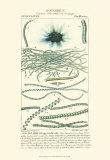 Turpin Botany IV Prints by  Turpin