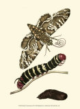 Butterfly Transformation III Prints