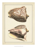 Antique Shells VI Prints by Denis Diderot