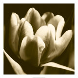 Sepia Tulip I Prints by Renee Stramel