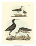 Selby Sandpipers I Giclee Print by John Selby
