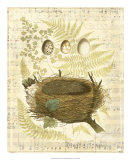 Melodic Nest and Eggs II Giclee Print