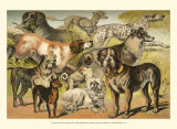 Dog Breeds II Prints by Henry J. Johnson