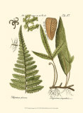 Small Antique Fern IV Posters