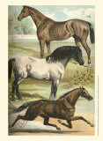 Horse Breeds I Art by Henry J. Johnson
