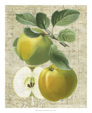 Orchard Medley I Giclee Print