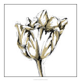 Tulip Sketch I Giclee Print by Ethan Harper