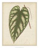 Textured Leaf Study II Giclee Print
