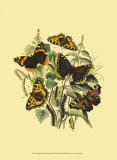 Small Butterfly Gathering II Print