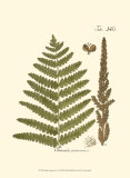 Small Antique Fern VI Posters