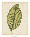 Textured Leaf Study IV Giclee Print
