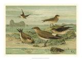 Shore Gathering V Giclee Print by Franz Eugen Kohler