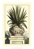Antique Munting Aloe I Print by Abraham Munting