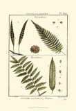 Fern Classification I Posters av Denis Diderot
