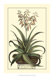 Antique Munting Aloe III Giclee Print by Abraham Munting