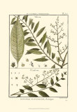 Fern Classification III Poster by Denis Diderot