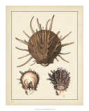 Antique Shells I Posters by Denis Diderot
