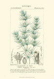 Turpin Botany I Print by  Turpin
