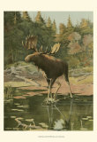 Moose Art by Oliver Kemp