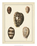 Antique Shells III Posters av Denis Diderot