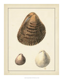 Antique Shells II Giclee Print by Denis Diderot