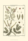 Fern Classification II Prints by Denis Diderot
