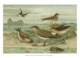 Shore Gathering V Prints by Franz Eugen Kohler