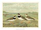 Shore Gathering IV Giclee Print by Franz Eugen Kohler