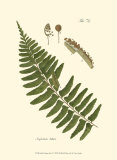 Small Antique Fern V Posters