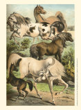 Horse Breeds II Posters by Henry J. Johnson