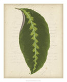 Textured Leaf Study III Giclee Print