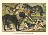 Dog Breeds III Posters by Henry J. Johnson