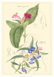 Botanical IV Giclee Print by Jacob Dietrich