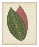 Textured Leaf Study I Giclee Print