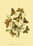 Small Butterfly Gathering I Prints