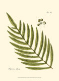 Small Antique Fern I Posters