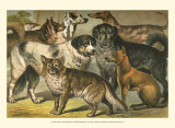 Dog Breeds I Posters by Henry J. Johnson