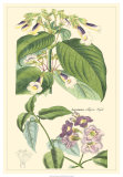Botanical II Giclee Print by Jacob Dietrich
