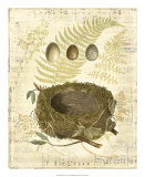 Melodic Nest and Eggs I Posters