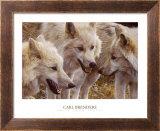 Tundra Summit Prints by Carl Brenders