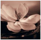 Magnolia Blush Kunstdrucke von Julie Greenwood