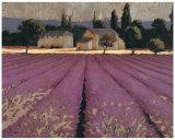 Lavender Weekend Lámina por Wiens, James