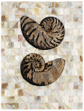 Pearlized Nautilus Prints by  Regina-Andrew Design