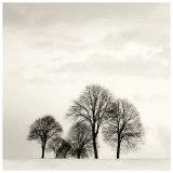 Winter Solstice II (detail) Posters by Ilona Wellman