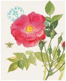 Wild Rose Posters by Elissa Della-piana