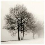 Winter Grove Art by Ilona Wellmann