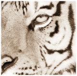 Tiger Pattern Poster by Frank & Susann Parker