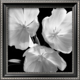 Tulips Print by Darlene Shiels
